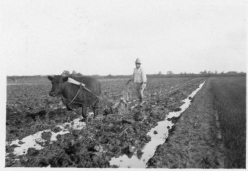 img066-Ploughing